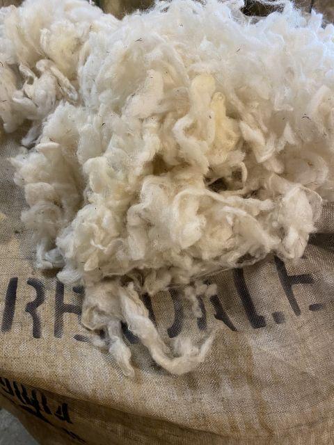 Wool Kempian Heather Sheep